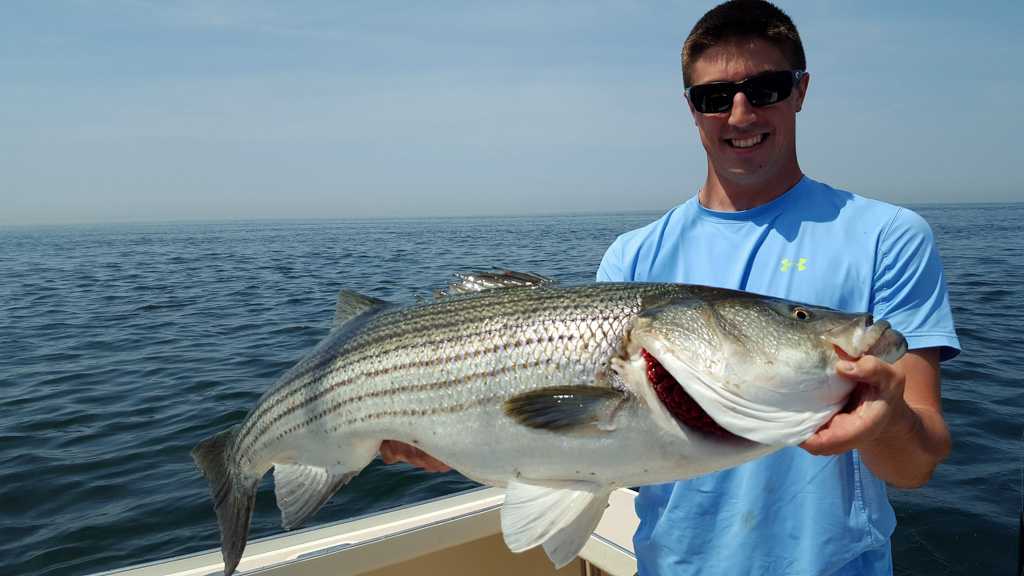 Young Man Holding Large Striped Bass