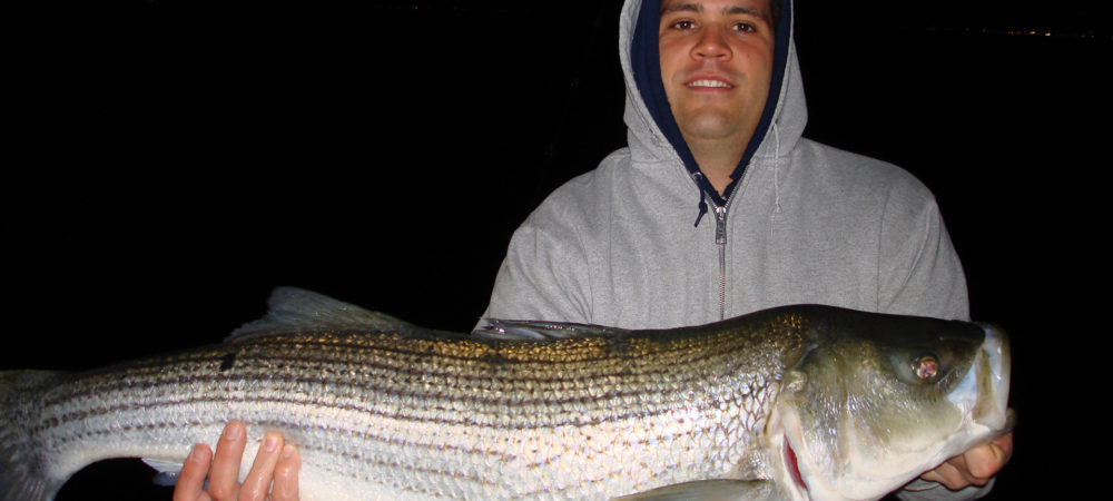 Striped Bass Caught in CT