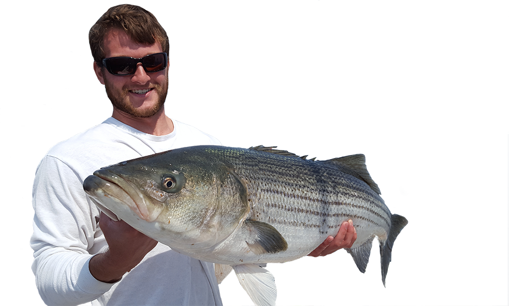 Beautiful Striped Bass Caught in CT